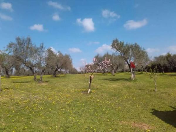 Villa in vendita a Vetralla, Con giardino, 2416 mq - Foto 17