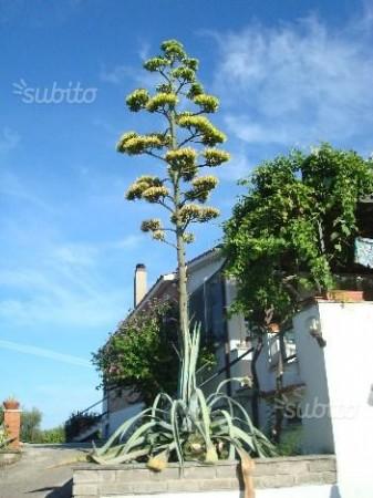 Villa in vendita a Velletri, Fienili, Con giardino, 350 mq - Foto 5