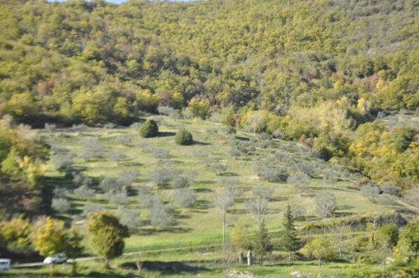 Locale Commerciale  in vendita a Chitignano, Campagna, Con giardino, 600 mq - Foto 11
