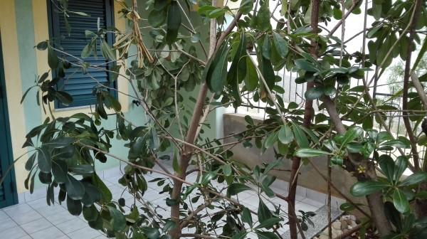 Villetta a schiera in vendita a Sant'Agata di Militello, Semicentrale, Con giardino, 200 mq - Foto 35