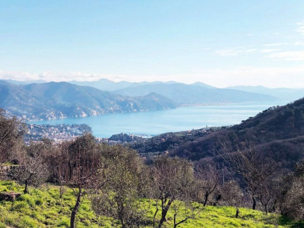 Casa indipendente in vendita a Santa Margherita Ligure, Dolcina Alta, Con giardino, 220 mq - Foto 3