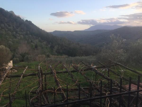 Casa indipendente in vendita a Ogliastro Cilento, Finocchito, Con giardino, 450 mq - Foto 5