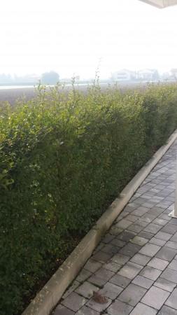 Appartamento in vendita a Albignasego, Con giardino, 150 mq - Foto 9