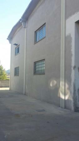 Capannone in affitto a Bertinoro, 370 mq