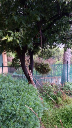 Appartamento in vendita a Recco, Megli, Con giardino, 50 mq - Foto 10