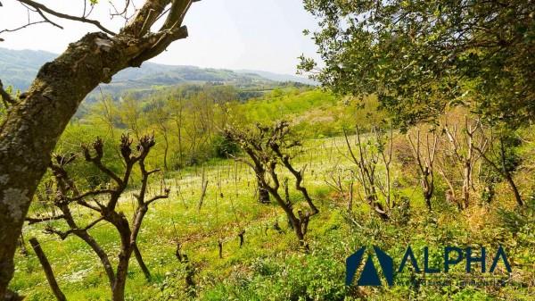 Casa indipendente in vendita a Bertinoro, Con giardino, 200 mq - Foto 26