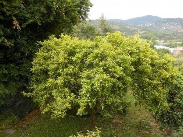 Casa indipendente in vendita a Rapallo, San Pietro Di Nonella, Con giardino, 130 mq - Foto 6
