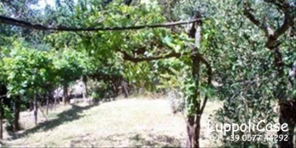 Villa in vendita a Murlo, Con giardino, 630 mq - Foto 6