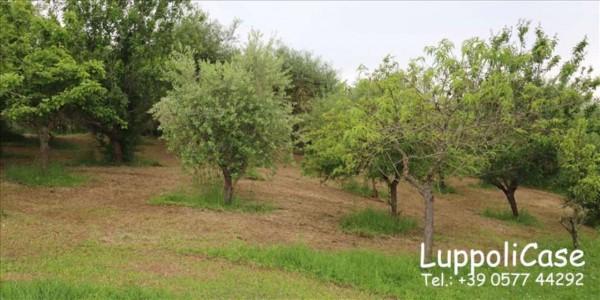Villa in vendita a Siena, Con giardino, 350 mq - Foto 2