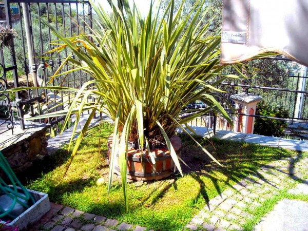 Villa in vendita a Recco, Liceto, Con giardino, 200 mq - Foto 41
