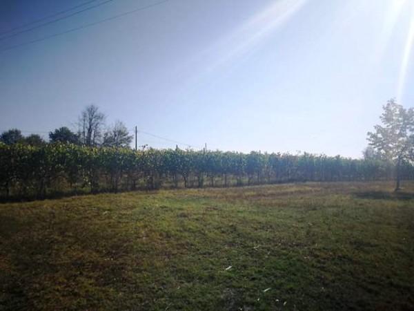 Locale Commerciale  in vendita a Rocchetta Tanaro, Castagnassa, Con giardino, 225 mq - Foto 4