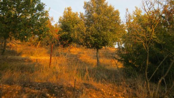 Rustico/Casale in vendita a Magione, Borgogiglione, Con giardino, 400 mq - Foto 11