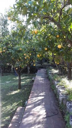 Villa in vendita a Trecastagni, Trecastagni, Con giardino, 220 mq - Foto 8