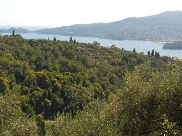 Villetta a schiera in vendita a Zoagli, 95 mq