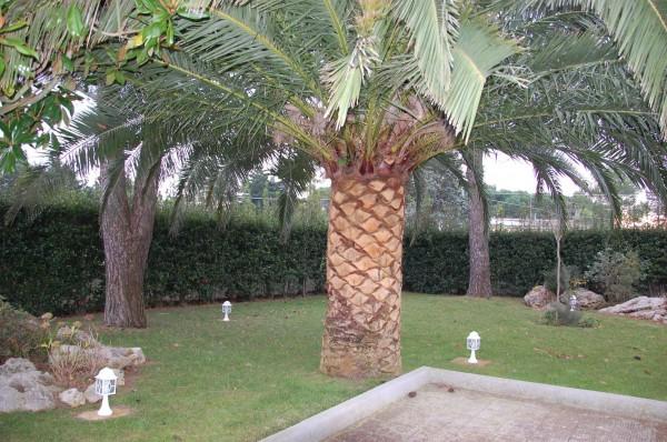 Villa in vendita a Martina Franca, Contrada Paretone, Con giardino, 350 mq - Foto 6