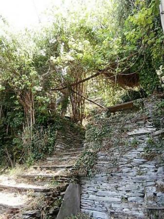 Rustico/Casale in vendita a Cogorno, Residenziale, Con giardino, 400 mq - Foto 11