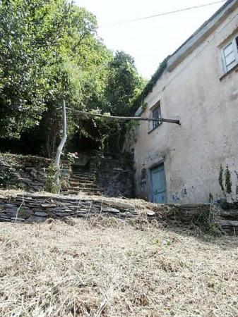 Rustico/Casale in vendita a Cogorno, Residenziale, Con giardino, 400 mq - Foto 13