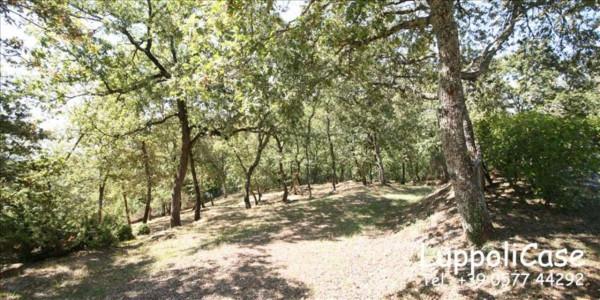 Villa in vendita a Castelnuovo Berardenga, Con giardino, 285 mq - Foto 17