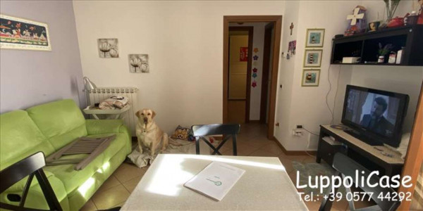 Appartamento in vendita a Sovicille, Con giardino, 57 mq - Foto 14