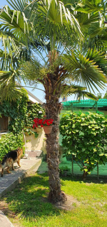 Villa in vendita a Dovera, Residenziale, Con giardino, 299 mq - Foto 21