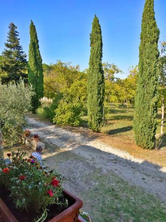 Rustico/Casale in vendita a Città di Castello, Badia Petroia, Con giardino, 280 mq - Foto 26
