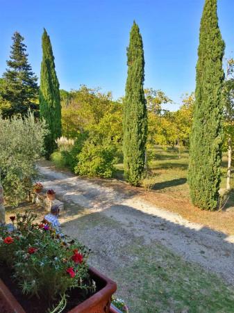 Rustico/Casale in vendita a Città di Castello, Badia Petroia, Con giardino, 280 mq - Foto 6