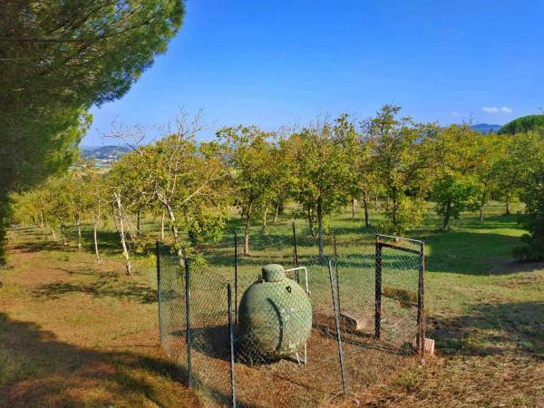 Rustico/Casale in vendita a Città di Castello, Badia Petroia, Con giardino, 280 mq - Foto 3