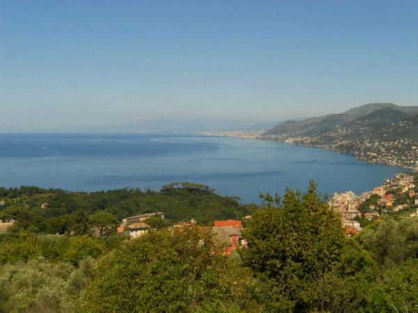 Villa in vendita a Camogli, Con giardino, 600 mq