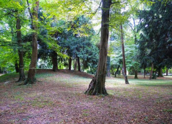 Rustico/Casale in vendita a Mogliano Veneto, Con giardino, 770 mq - Foto 4