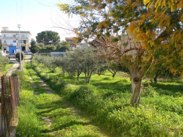 Locale Commerciale  in vendita a Balestrate, Con giardino, 1400 mq - Foto 16