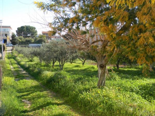 Locale Commerciale  in vendita a Balestrate, Con giardino, 1400 mq - Foto 14